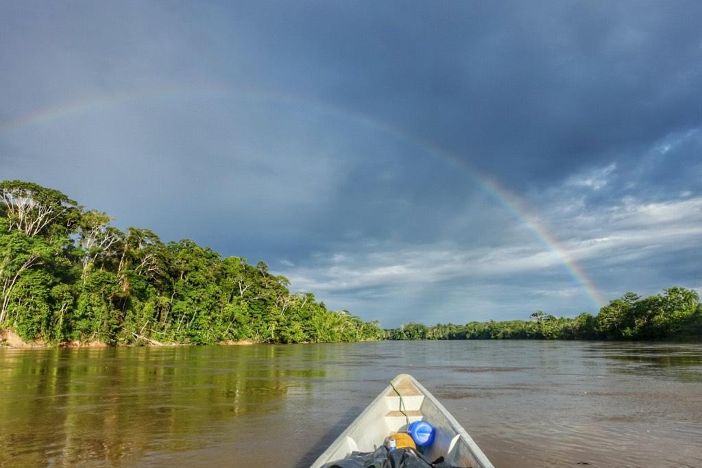regenboog in de jungle
