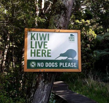5 plekken die je gezien moet hebben in Nieuw-Zeeland