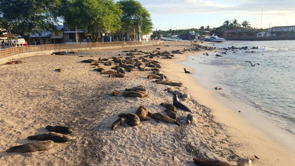 zeeleeuwen san cristobal galapagos