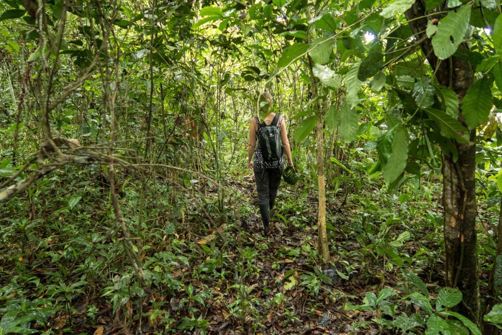 wandelen in jungle