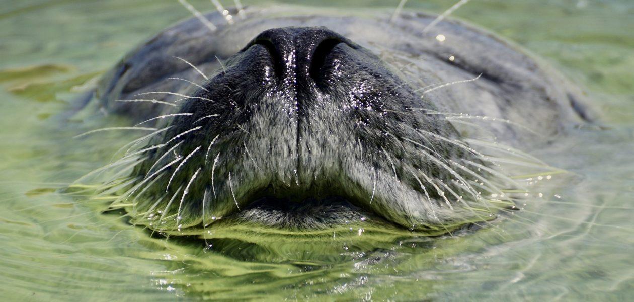 Zeehond bezienswaardigheden op Texel ecomare
