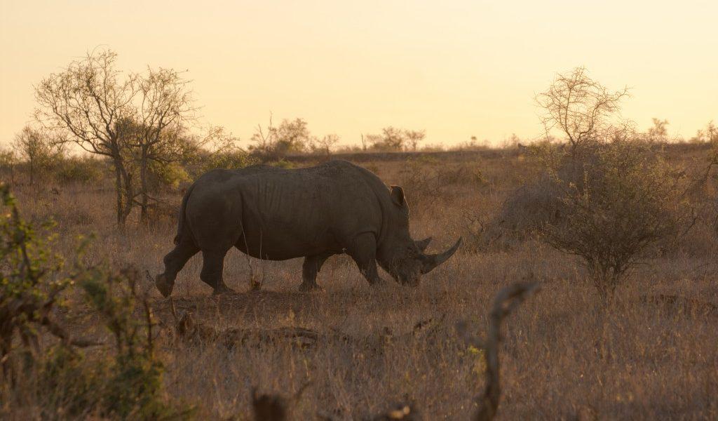 rondreizen-in-zuid-afrika