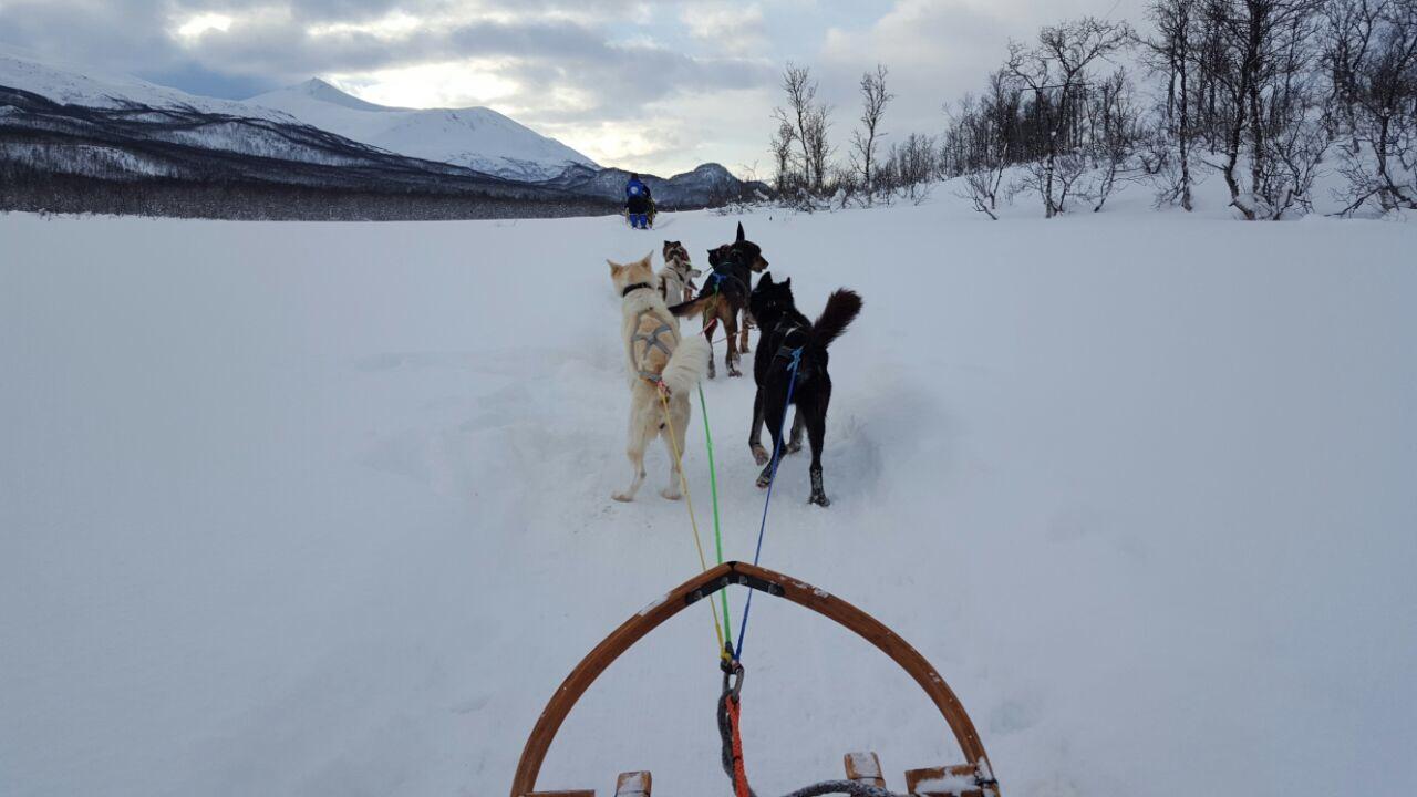 2 huskytocht in noorwegen