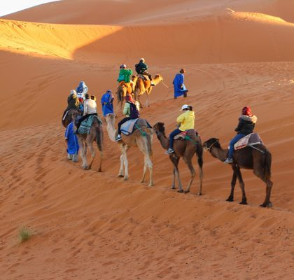 diervriendelijk reizen kamelen woestijn